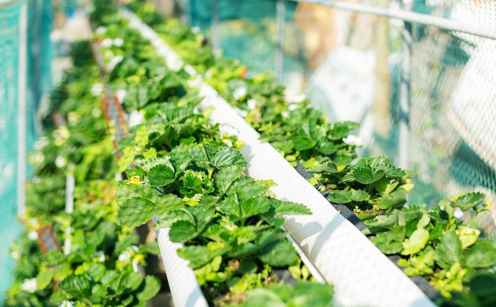 Your One-Stop Shop For Quality Hydroponic Supplies In